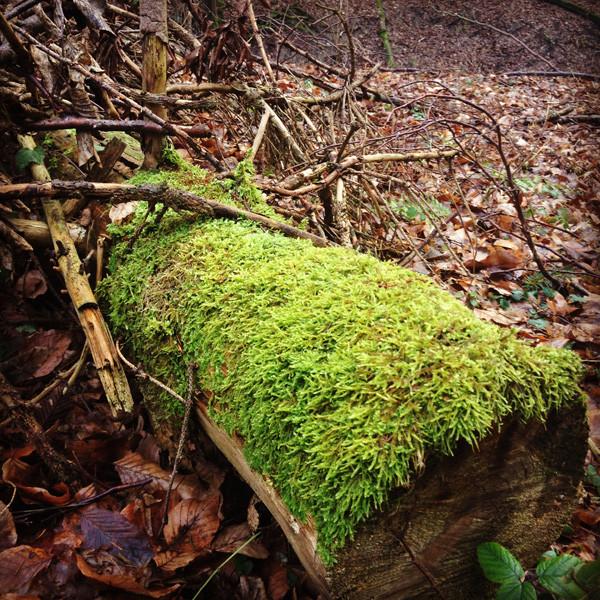 Auf Wandertour: Moos auf Baum
